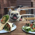 Dining with Fido in Charlottesville