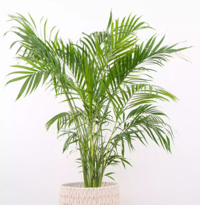Pet Friendly Houseplants for Apartments
