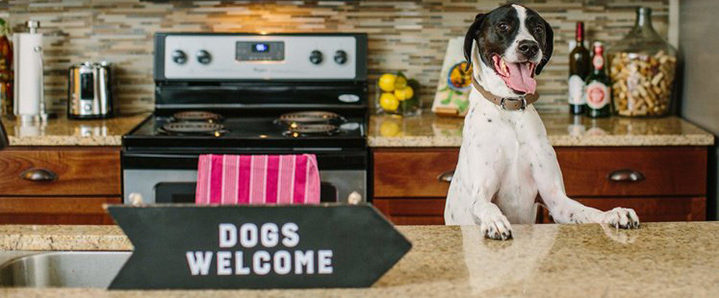 Dogs Welcome sign inside Charlottesville Apartment